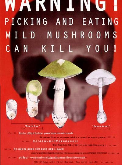 An Overview of Mushroom Poisonings in North America