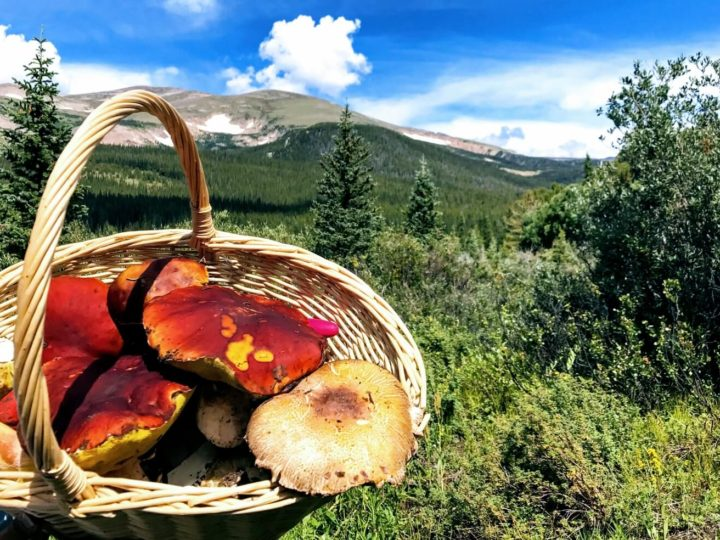 2006: A Banner Year for Rocky Mountain Mushrooms